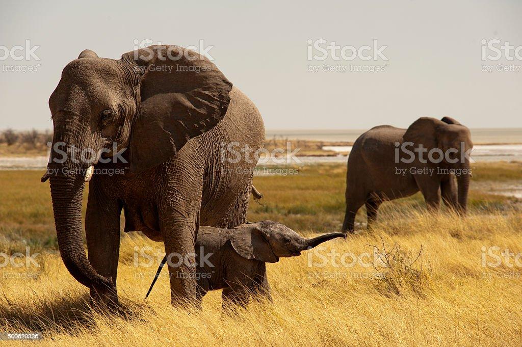 Elephant mother with baby, Okerfontein waterhole, Etosha Nationa stock photo