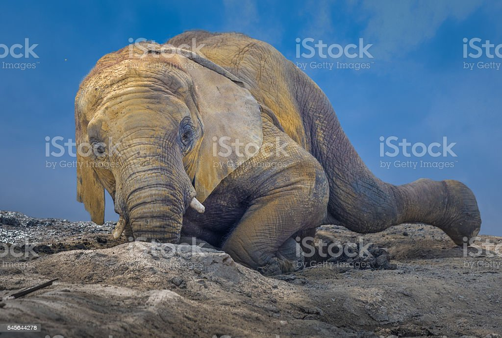 Elephant mud bath stock photo