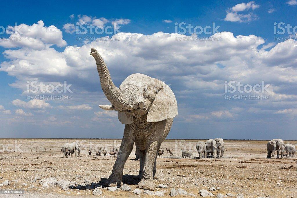 elephant namibia trunk stock photo