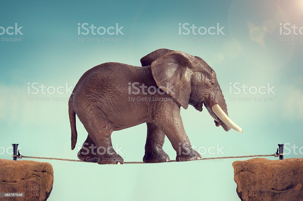 elephant on a tightrope stock photo