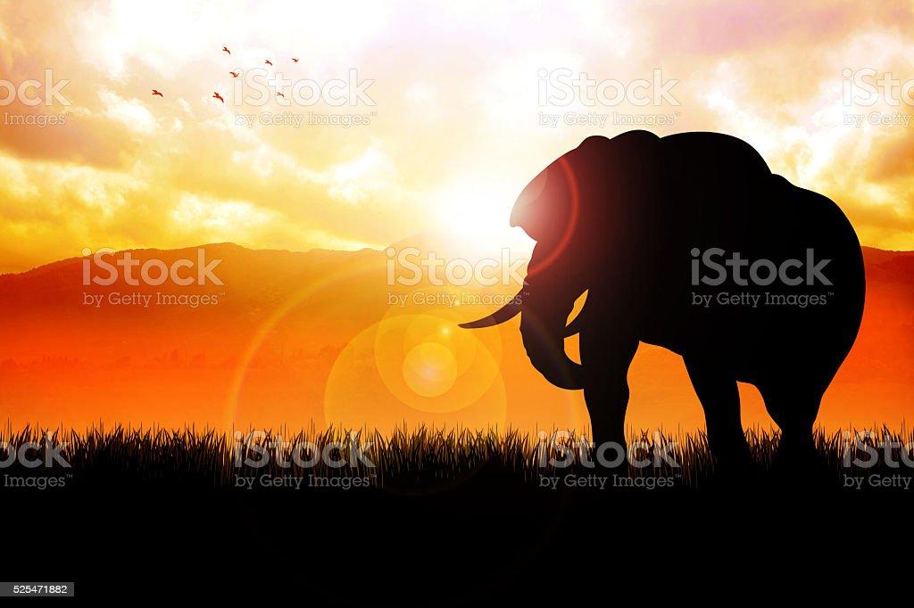Elephant On Beautiful Landscape stock photo