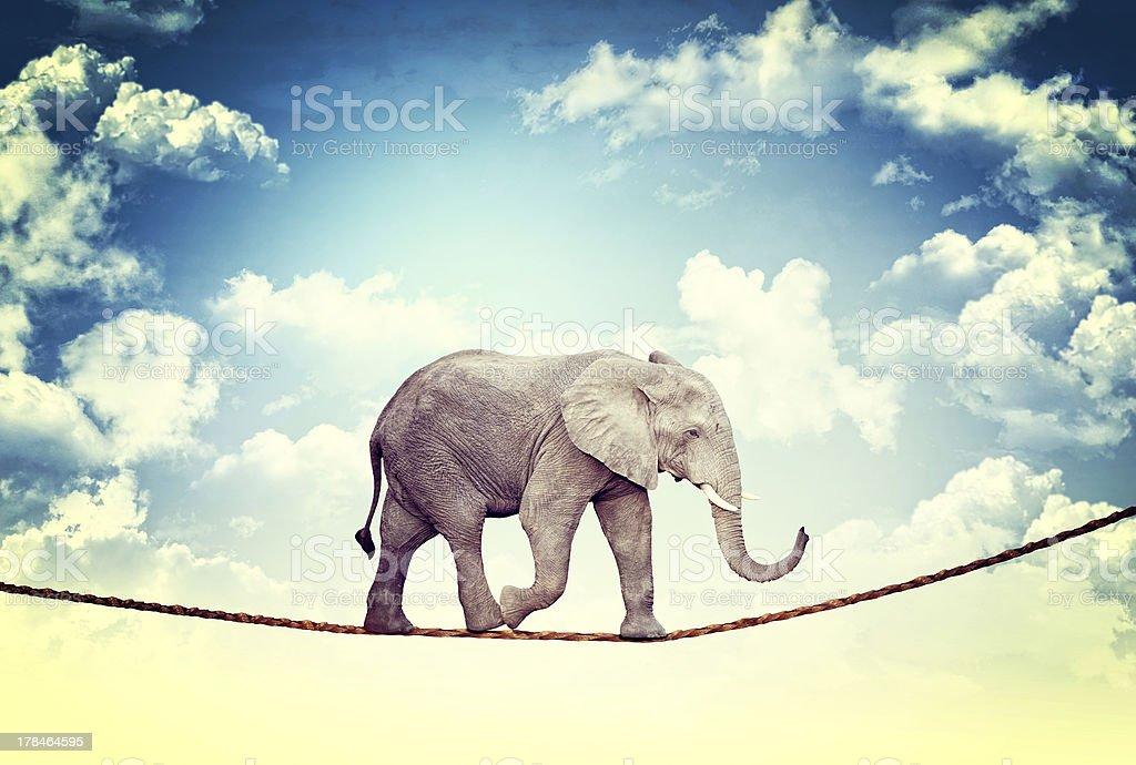 elephant on rope stock photo
