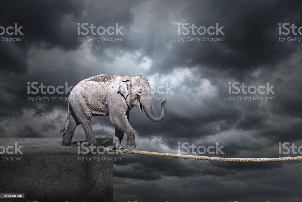 Elephant on tightrope stock photo