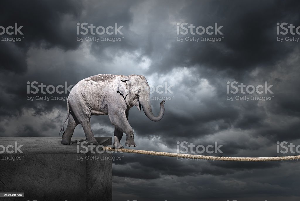 Elephant on tightrope stock photo