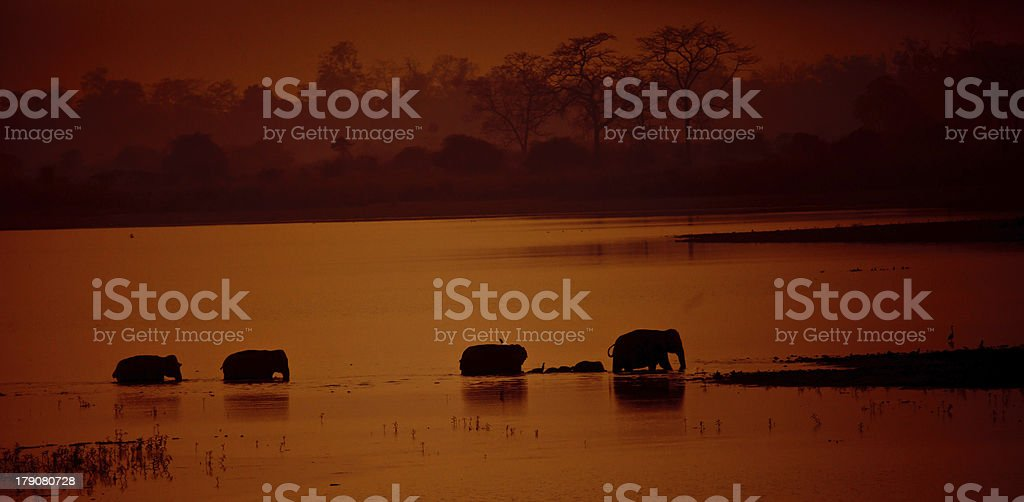 elephant stock photo