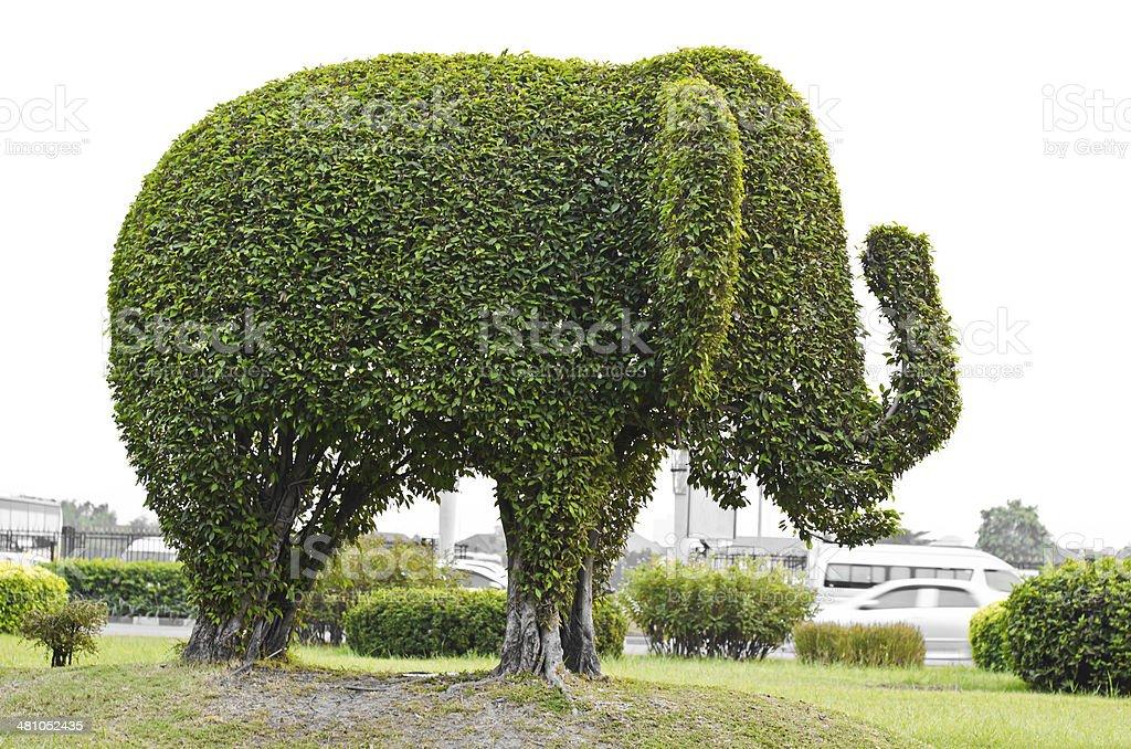 Elephant. stock photo