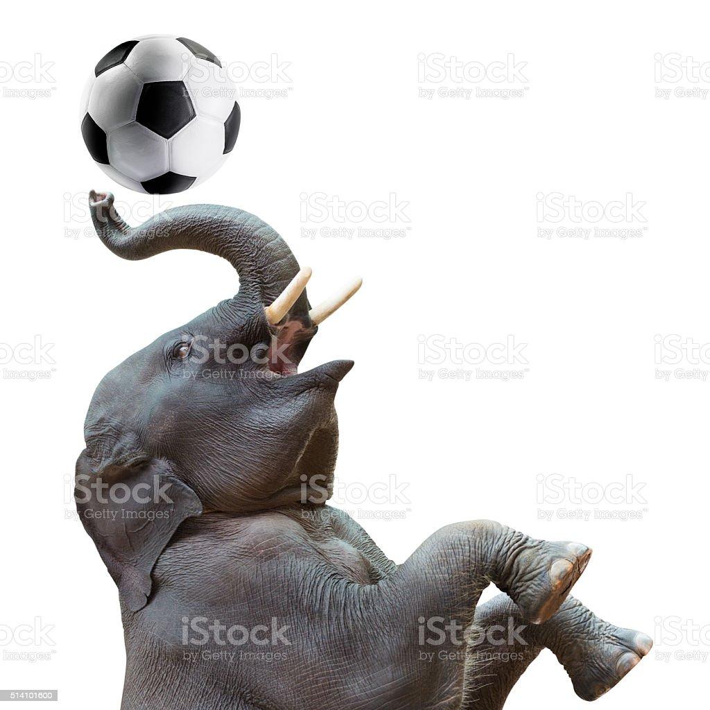 Elephant playing soccer stock photo