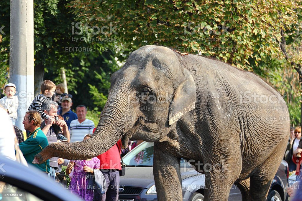 elephant playing with people royalty-free stock photo