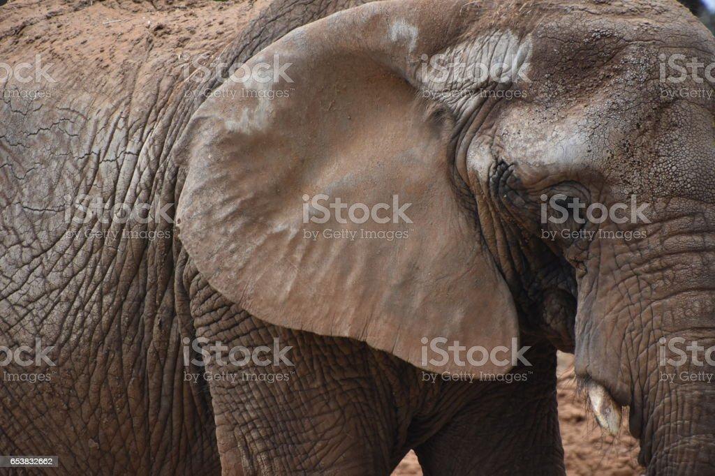 Elephant profile stock photo