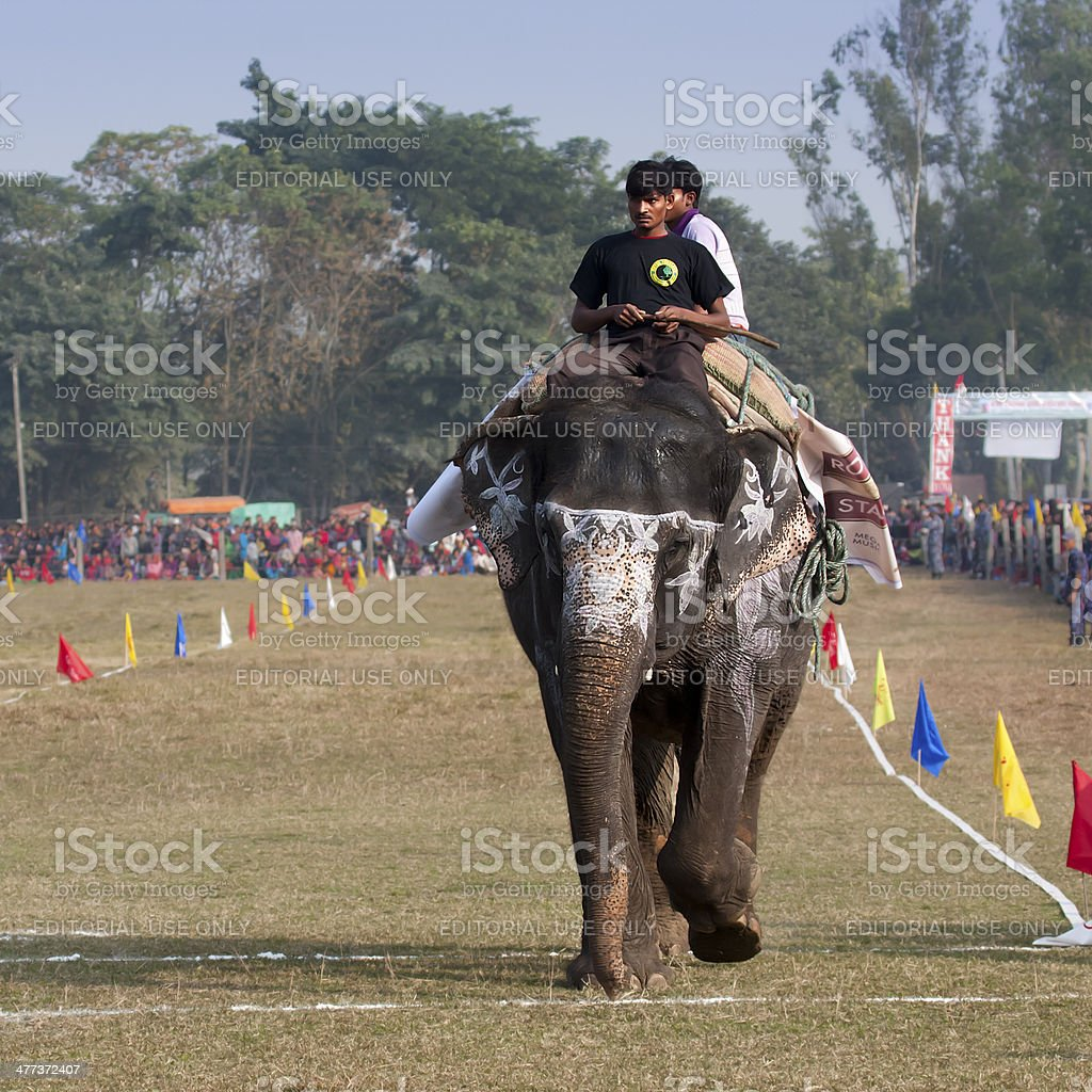 Elephant race - Elephant festival, Chitwan 2013, Nepal royalty-free stock photo