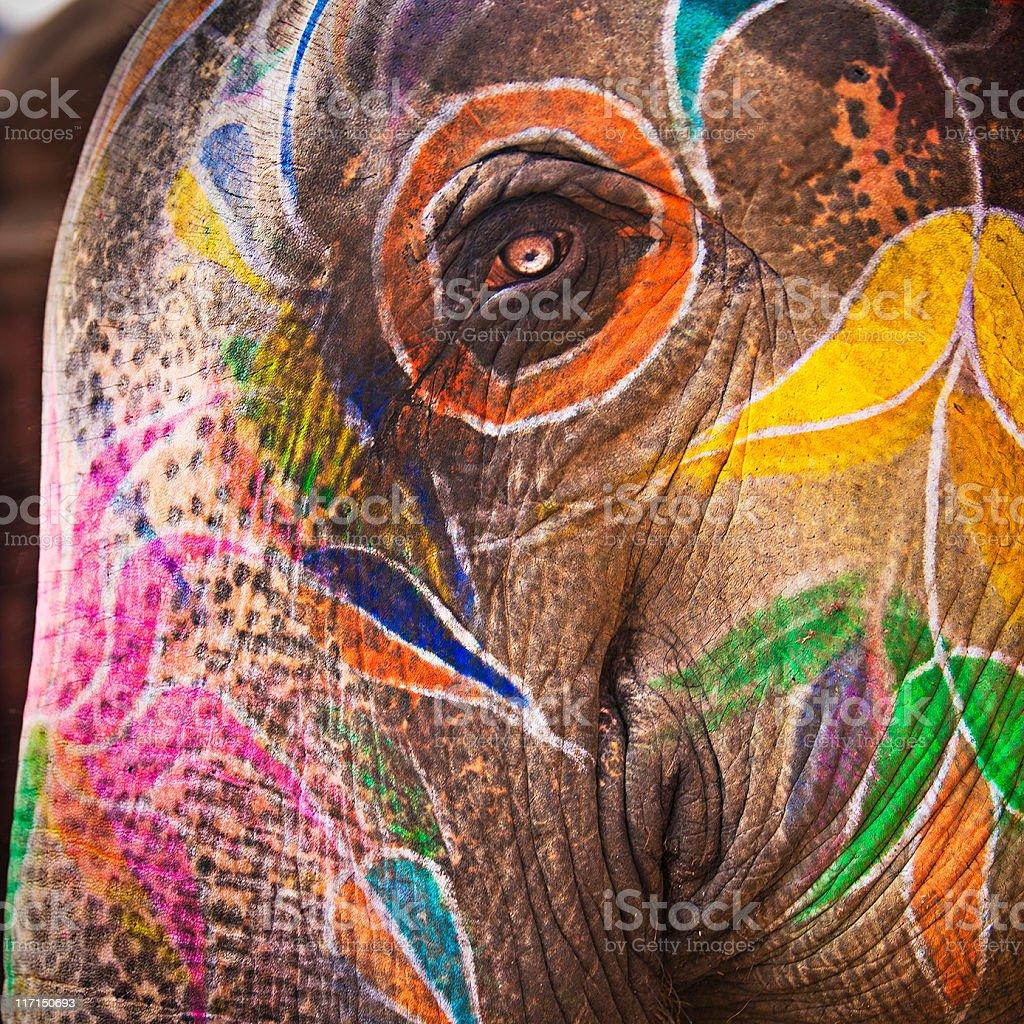 Elephant sight royalty-free stock photo