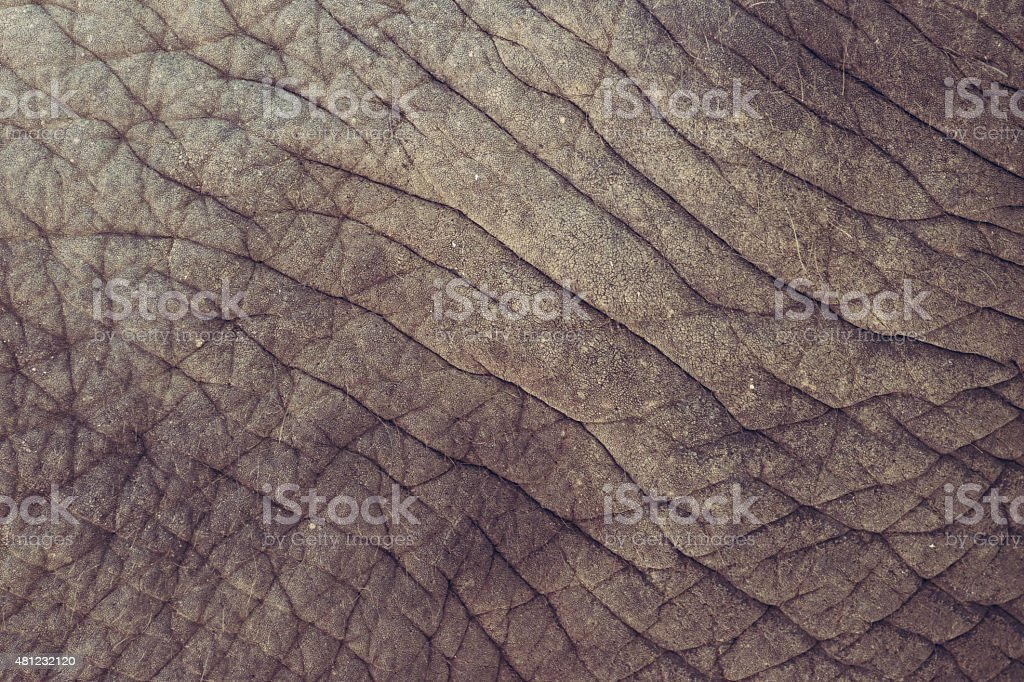 Elephant skin background texture abstract stock photo