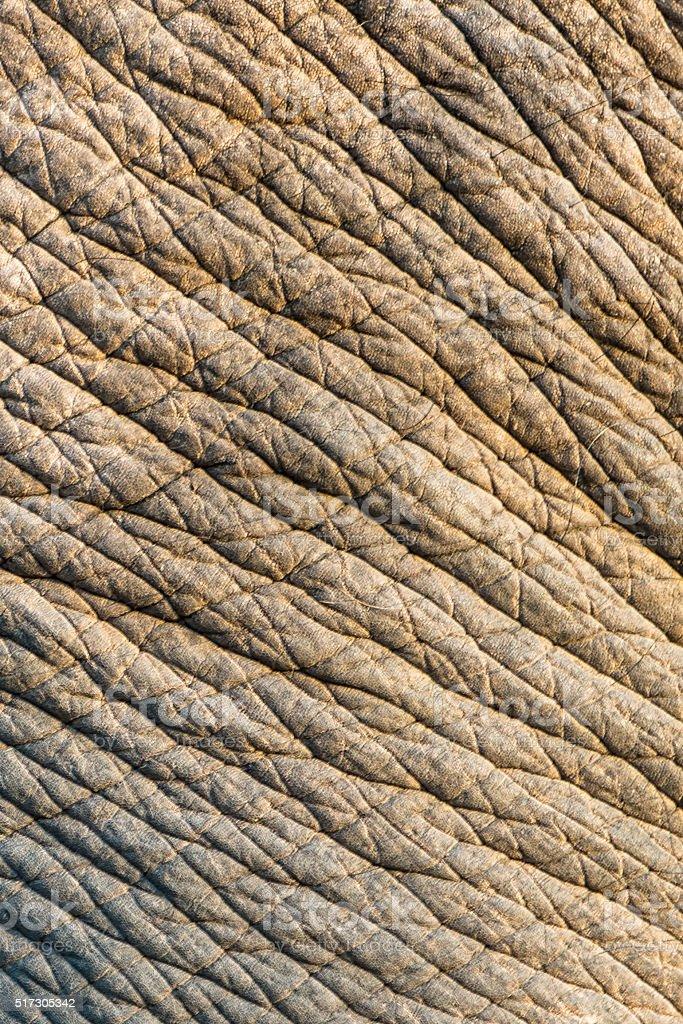 Elephant skin texture background stock photo