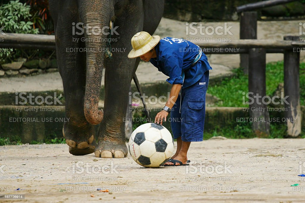 Elephant soccer game stock photo