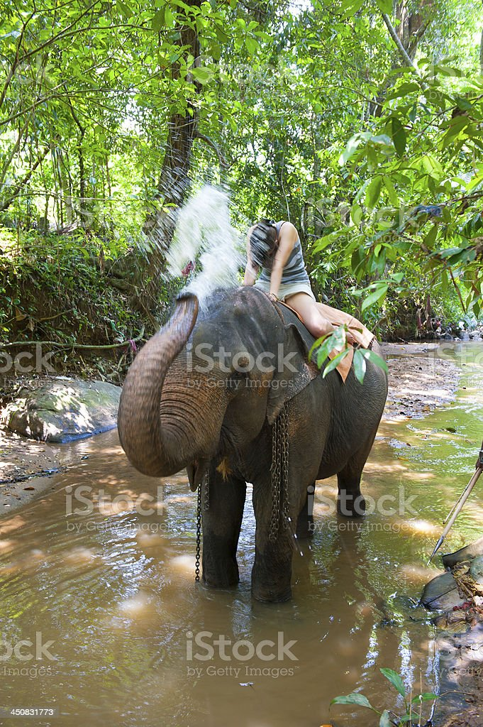 Elephant spraying water to woman royalty-free stock photo