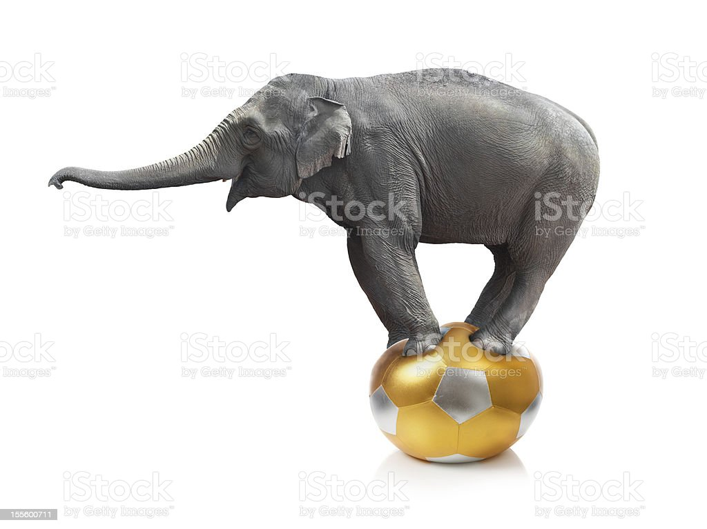 Elephant standing on a ball on a white background stock photo