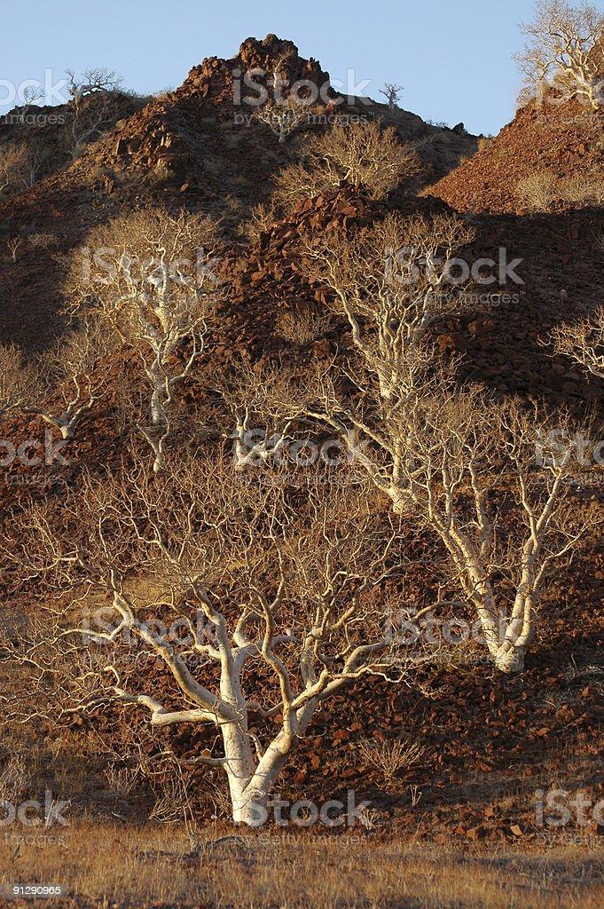 elephant trees on hillside royalty-free stock photo