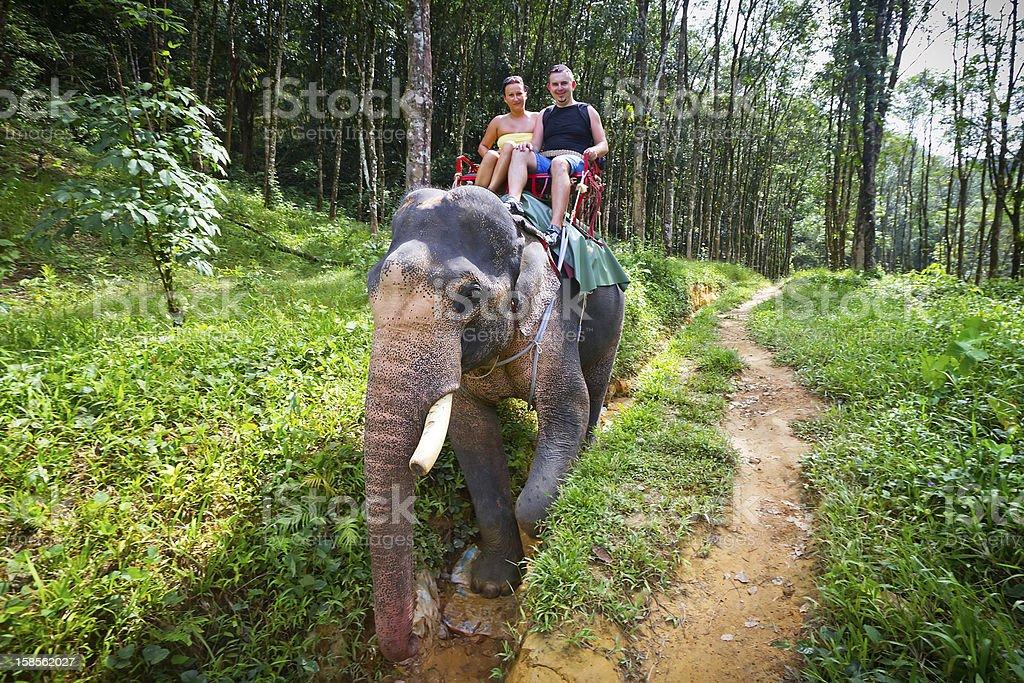 Elephant trekking in Khao Sok National Park stock photo