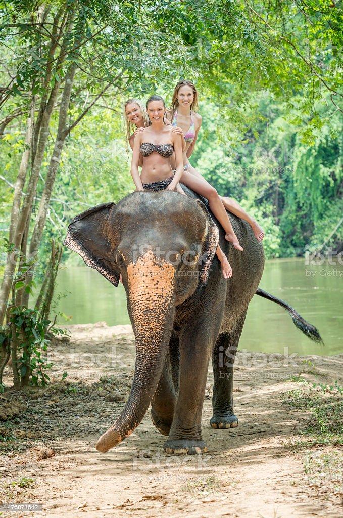 Elephant Trekking, Tourist Women on Vacation, Thailand stock photo