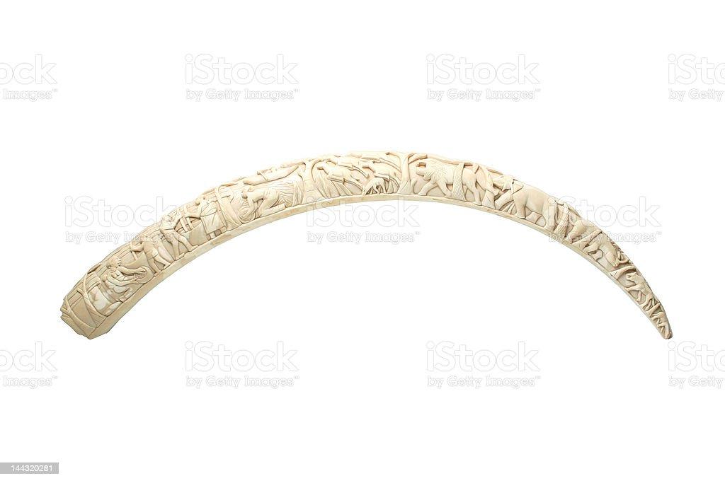 Elephant tusk stock photo
