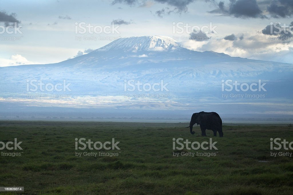 Elephant Under a Cloud royalty-free stock photo