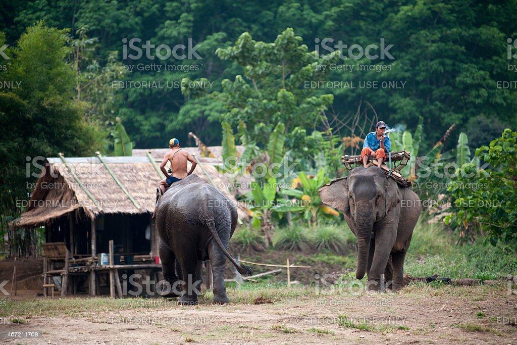 village aux éléphants à Kanchanaburi, Thaïlande photo libre de droits