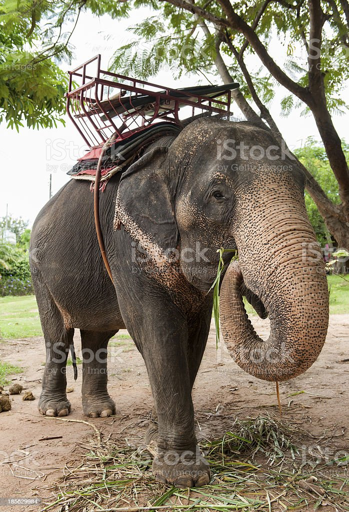 Elephant Village (Study Center) Surin Thailand royalty-free stock photo