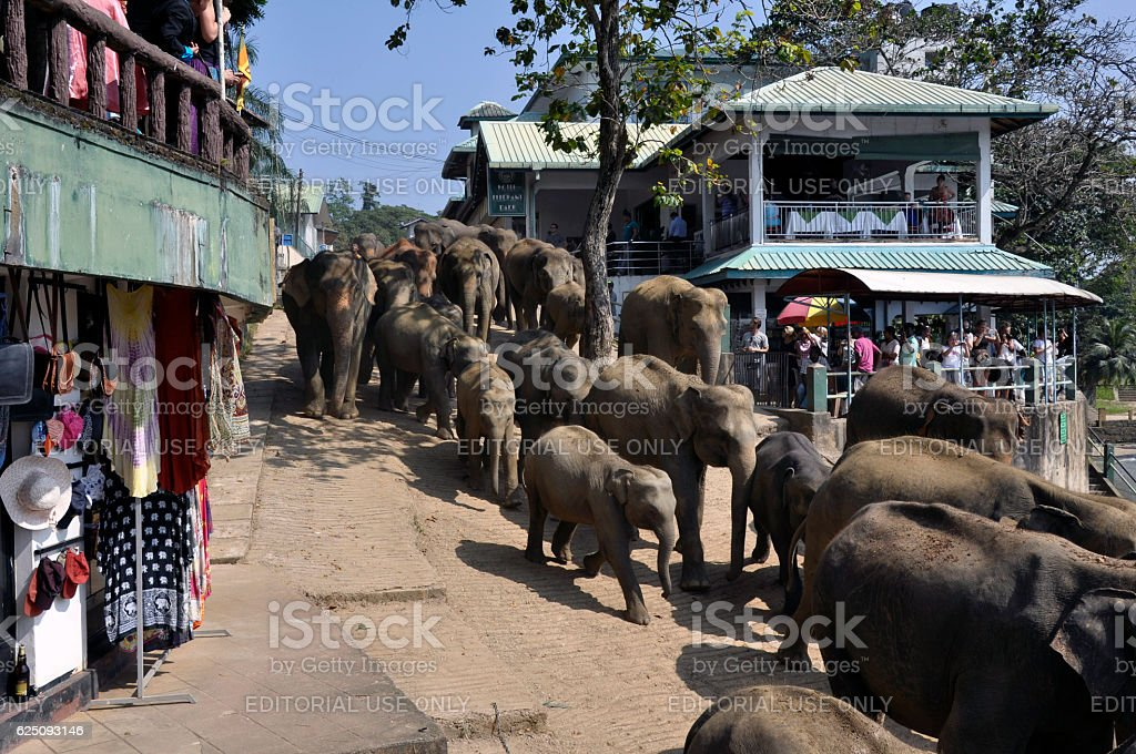 Elephant Walk stock photo