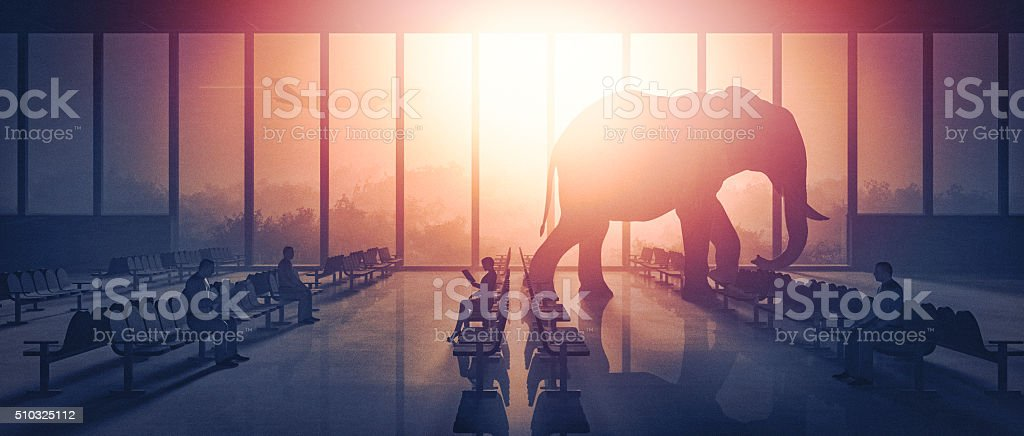 Elephant walking at the airport stock photo