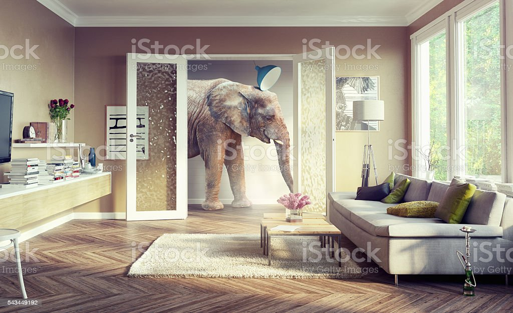 elephant, walking in the apartament rooms. stock photo