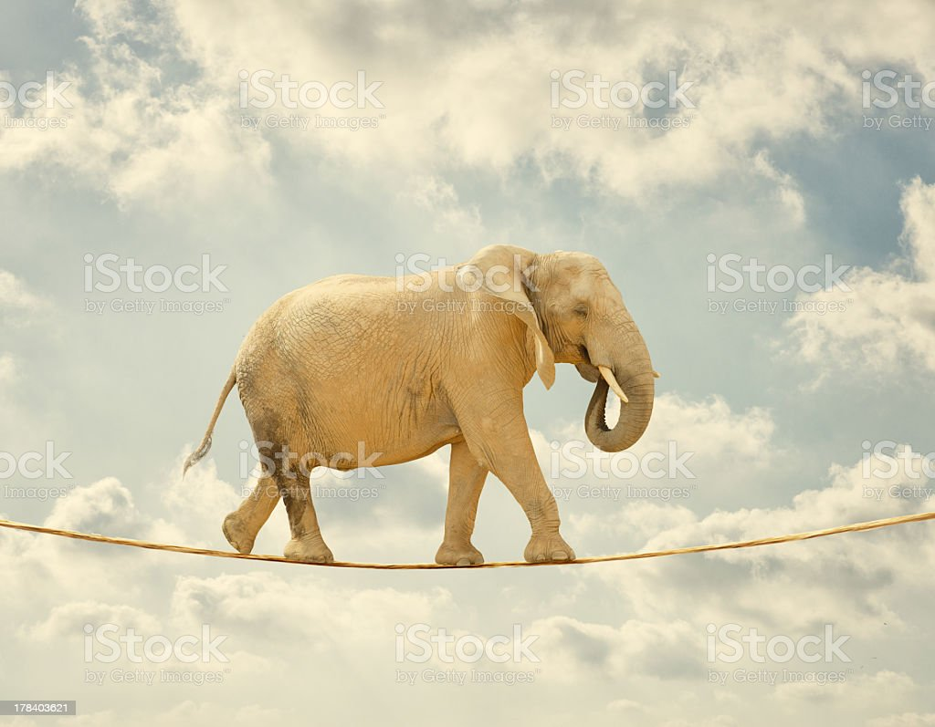 Elephant Walking On Rope royalty-free stock photo