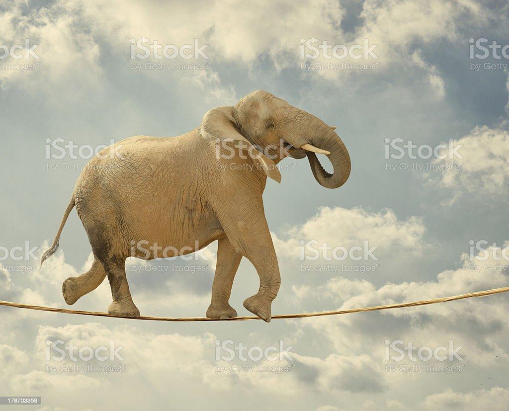 Elephant Walking On Rope stock photo