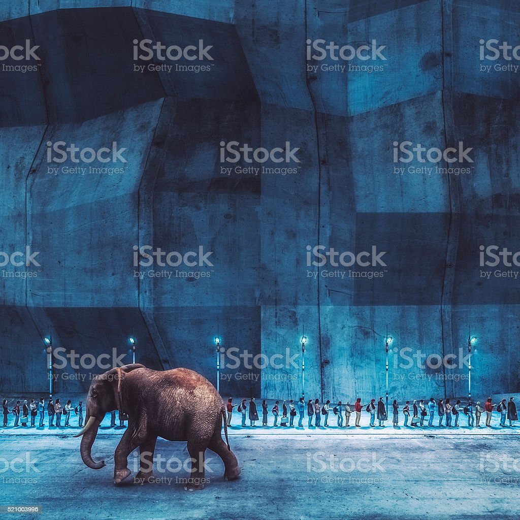Elephant walking on the street stock photo