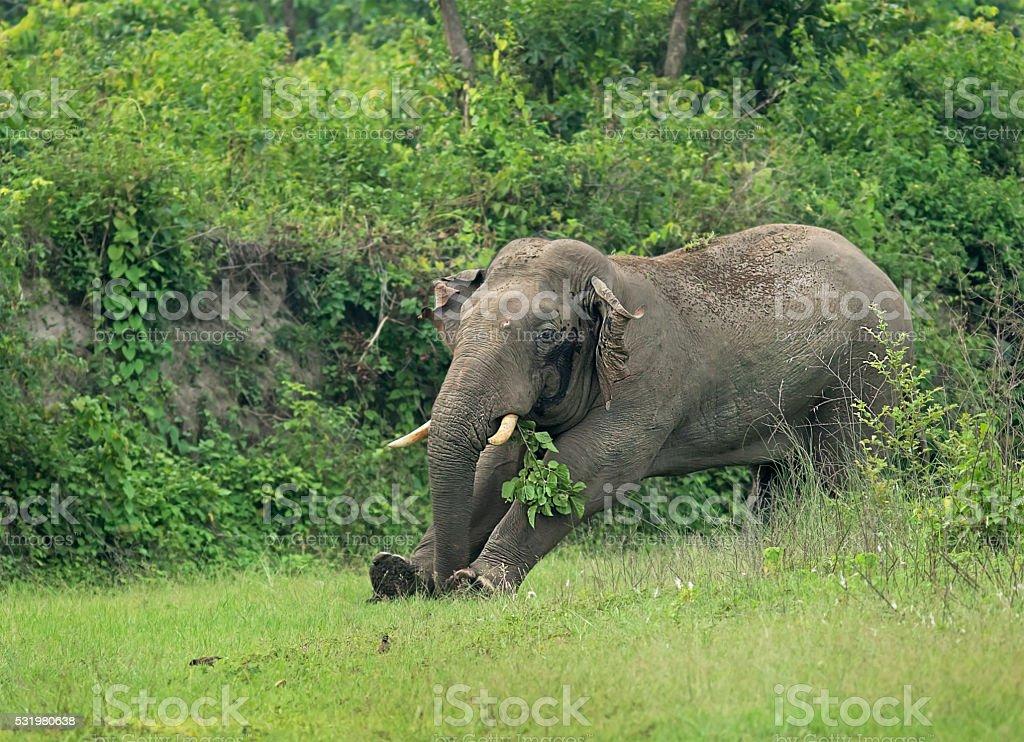 Elephant warm up, West Bengal, India stock photo