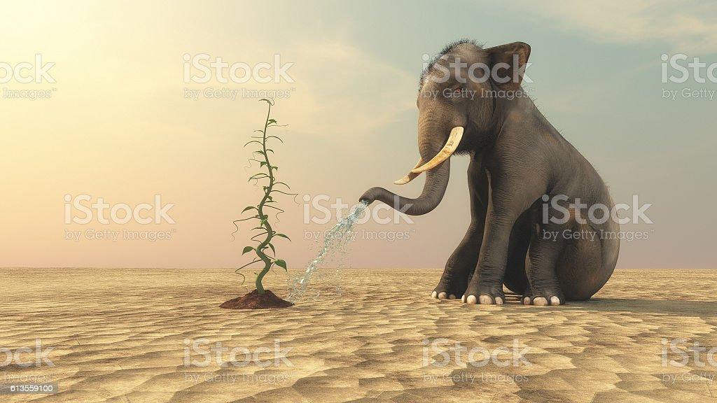 Elephant with a beanstalk stock photo