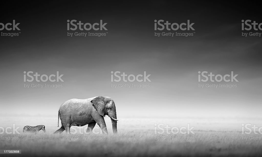 Elephant with zebra (Artistic processing) stock photo