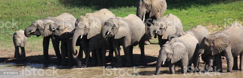 Elephants 2 stock photo