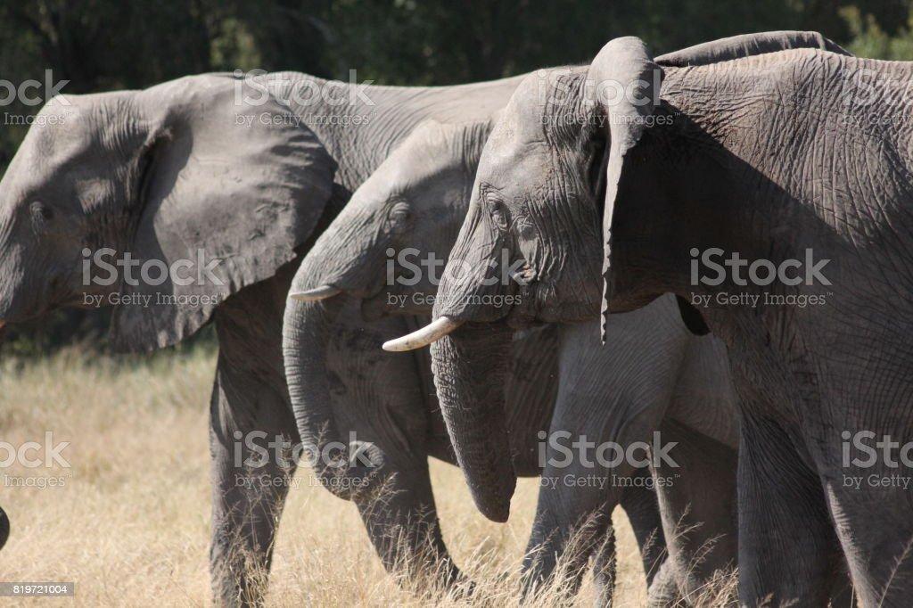 Elephants 3 stock photo