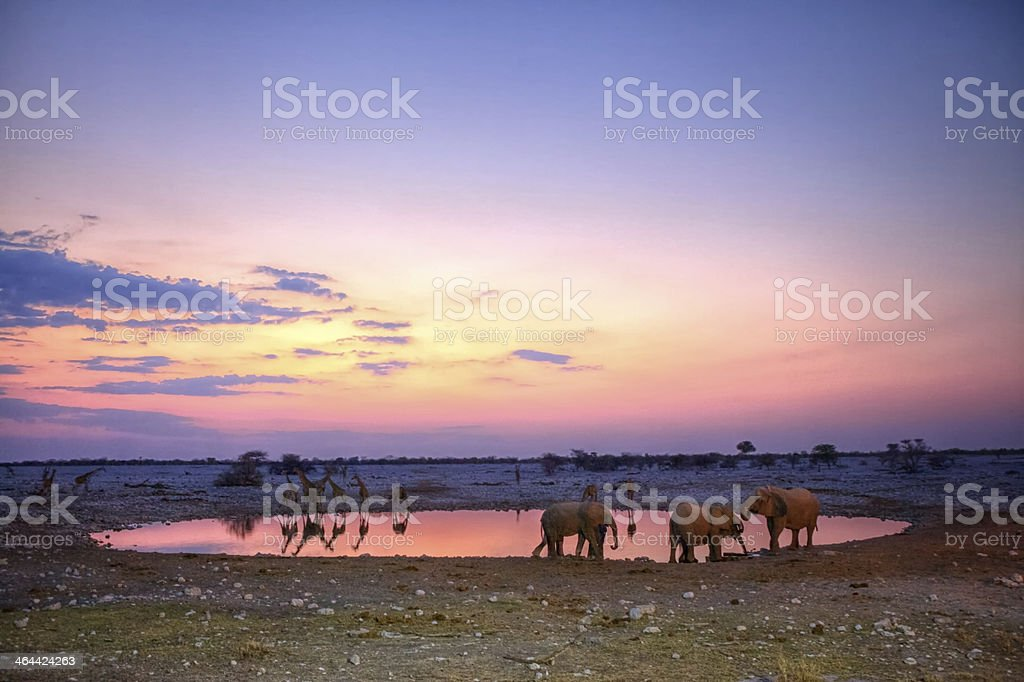Elephants and giraffes at sunset, Namibia stock photo