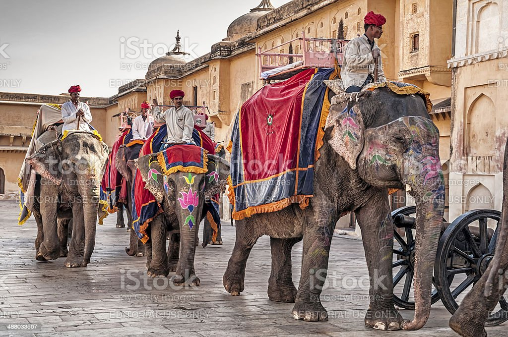 Elephants and Guides at Amber Fort in Jaipur, India stock photo