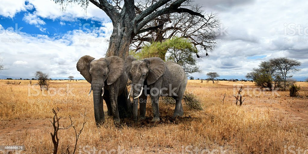 Elephants are chilling out in the shade stock photo