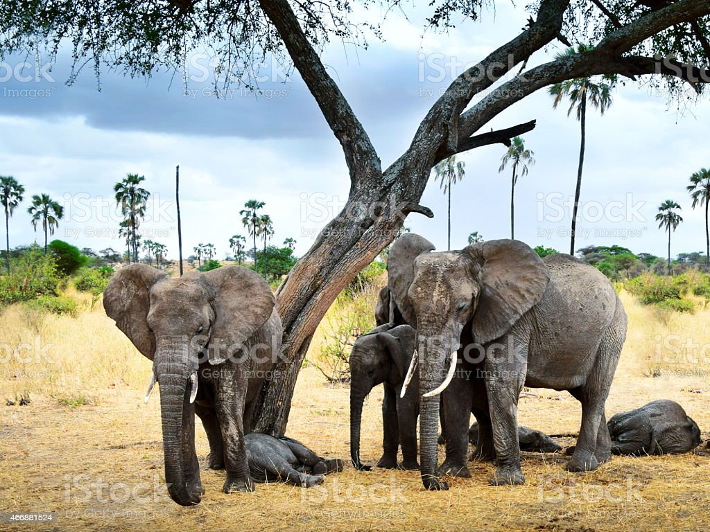 Elephants are chilling out under the shadow stock photo
