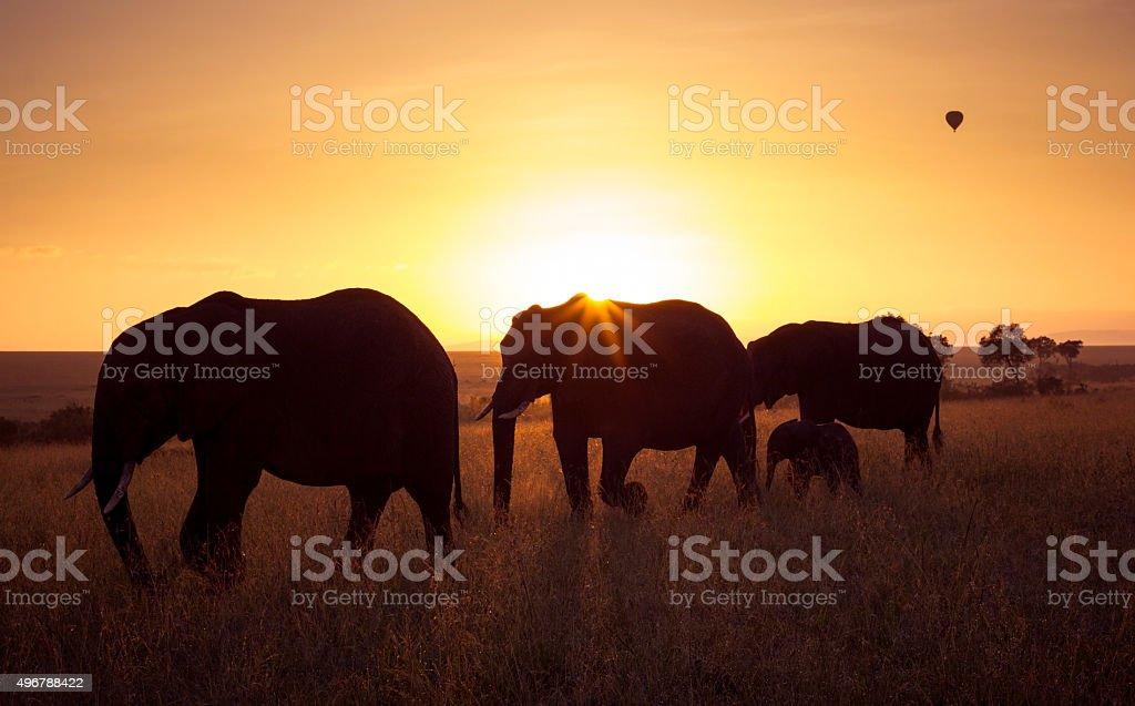 Elephants at sunrise stock photo