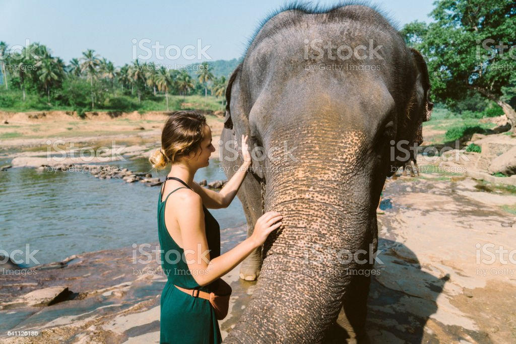 Elephants bathing in Pinnavella stock photo