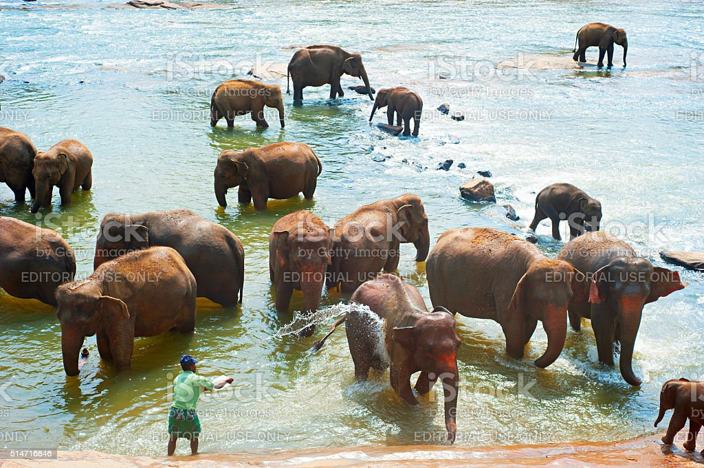 Elephants bathing, Sri Lanka stock photo