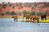 Elephants, Botswana.