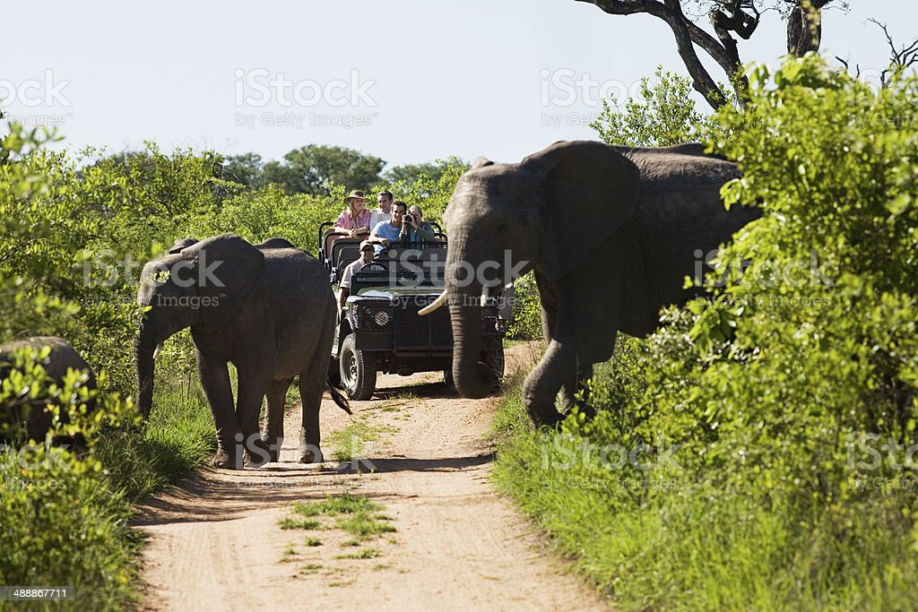 Elephants Crossing Road With Jeep In Background stock photo