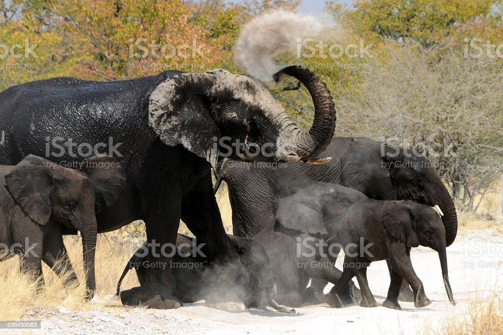 Elephants, Etosha, Namibia stock photo