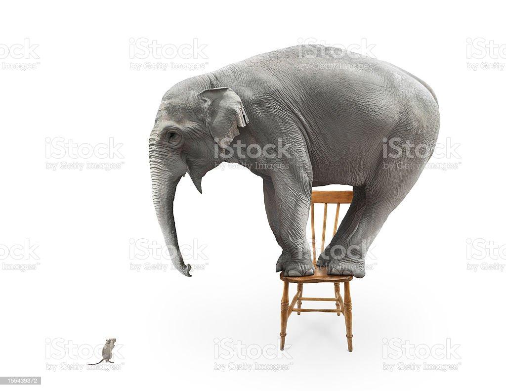 Elephant's fear of mice stock photo