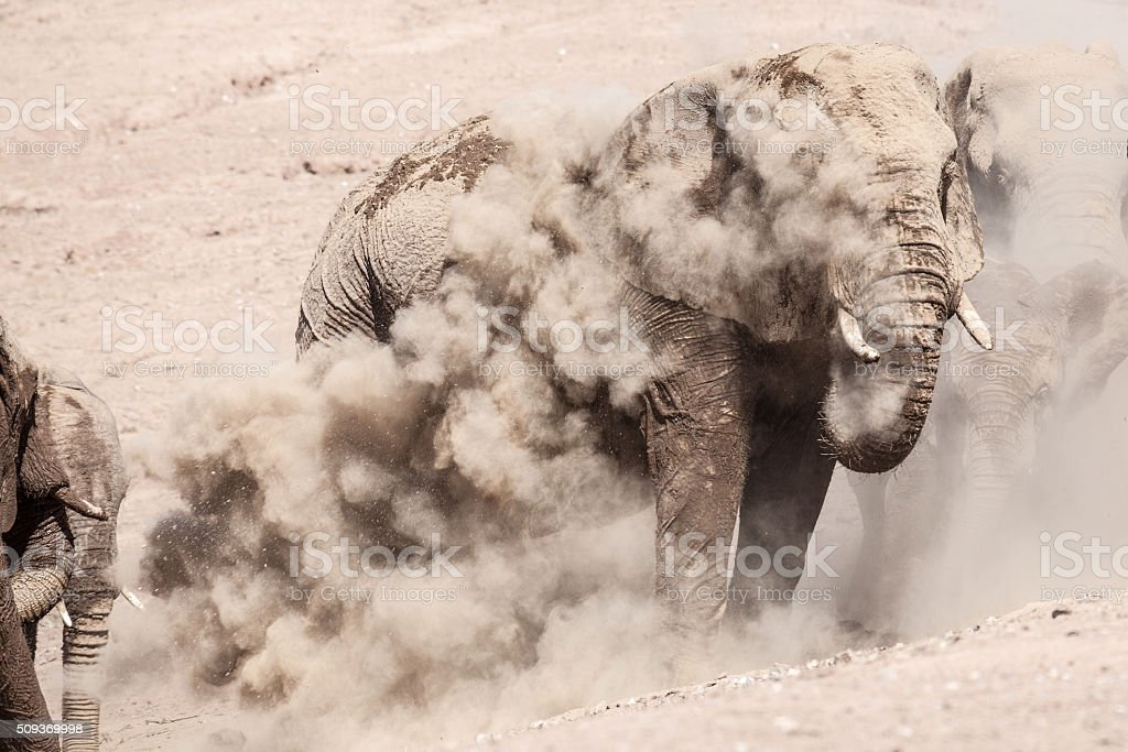 Elephants in dust stock photo